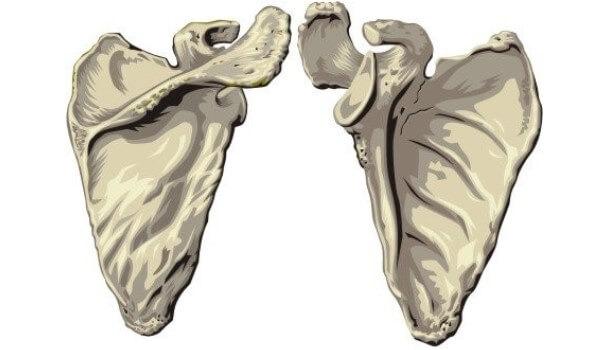 Ból łopatki - jak sobie poradzić z bólami kości łopatki?